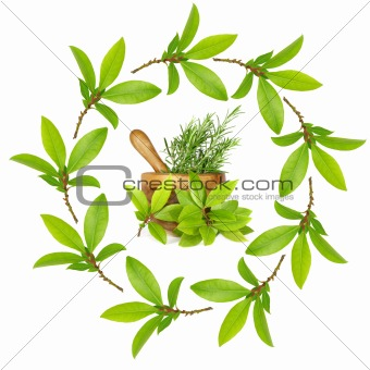 Bay Leaf and Rosemary Herbs