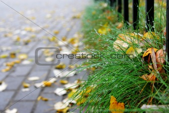 Alley and grass