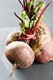 Unwashed fresh beetroot