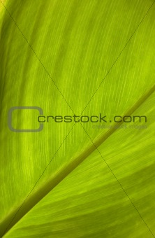close up of the green leaf texture