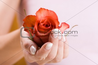 Beautiful hand with rose