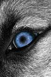 Wolf Eye Bluer