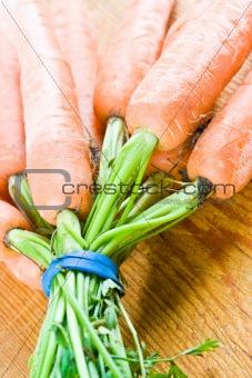 Carrots bound together