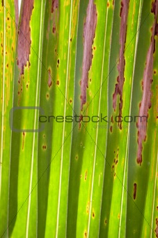 An abstract of a palm leaf