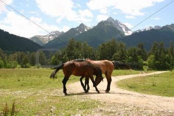 ridge Caucasus Mountains
