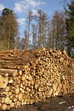 Woodpile