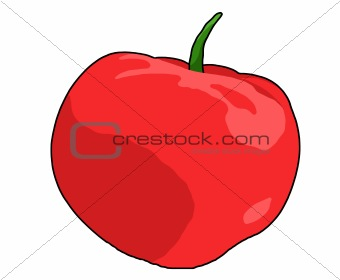 Tomato Illustration