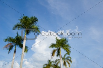Palm againts sky