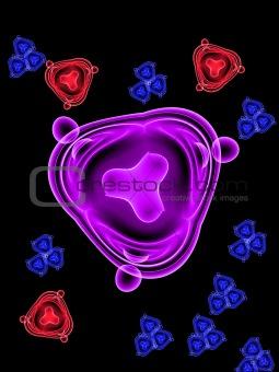 Bacteria 15