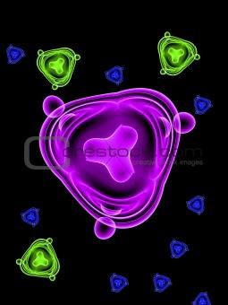 Bacteria 16