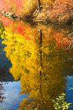 Fall Colors Wenatchee River Yellow Tree Reflections River Steven