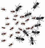 Worker Ants Battle