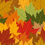 Fall maple leaf seamless repeating background