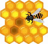 golden honeycomb with bee