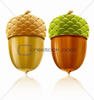 vector acorn nuts