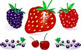 Vector Berry Collection