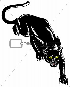 Black panther on the prowl