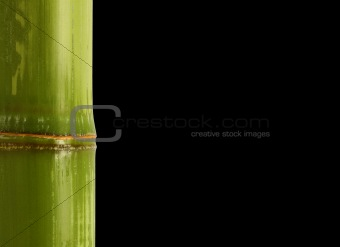 bamboo detail background