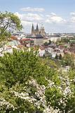 prague - cathedral of st. vitus - spring