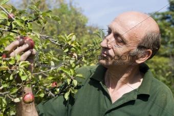 Portrait of gardener and apple