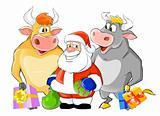 Santa Claus with the bulls