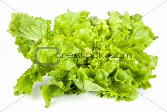 green lettuce isolated on a white background