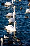 Birds in Stockholm