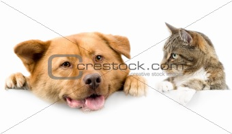 Cat and dog above white banner