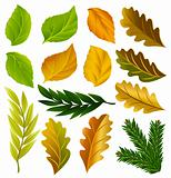 vector summer and autumn leaves collection