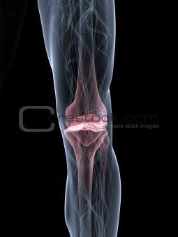 painful knee