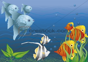 Colorful fish of coral reefs