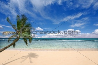 Palm Tree Over the Ocean Waves