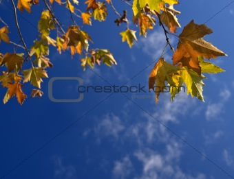 autumn leafs against blue sky