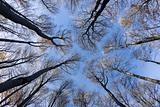 treetops and trunks