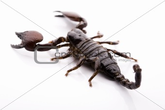 Scorpion background with path