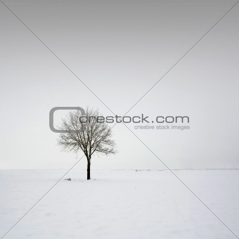 Single tree in field during winter 4