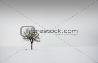 Single tree in field during winter 2