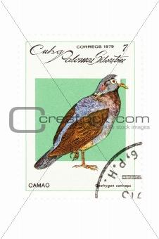 postage stamp bird closeup