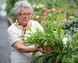 Senior woman doing some gardening