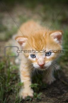 Kitten hunting outside