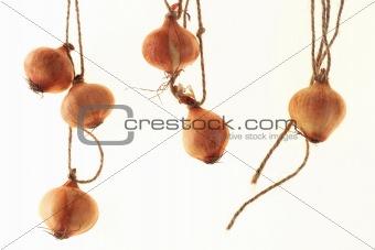 british baby onion