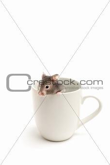 hamster in hiding