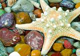 starfish on the pebble