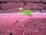 sprout on old wall