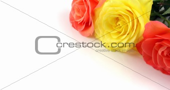 3 Roses forming a frame