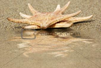 Starfish Reflected