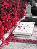 Petals on Grave