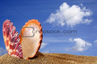 Beach Scallop