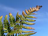 Branch of fern