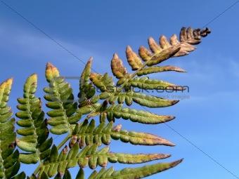 Branch of fern
